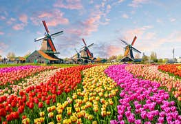 How to Get a Student Visa for the Netherlands
