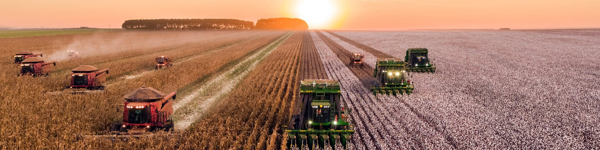 Why You Should Apply to a Master's in Agricultural Economics