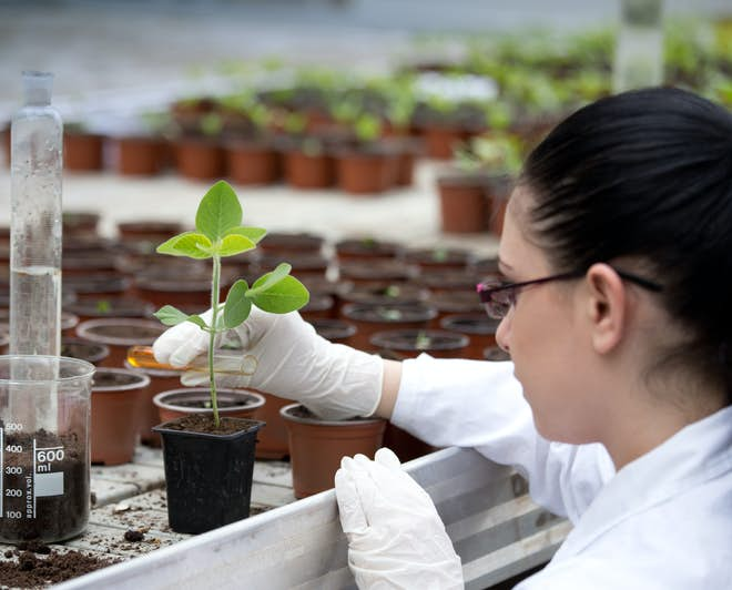 Female biologist doing research on plants