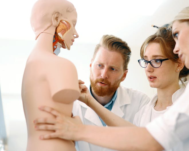 Medicine students examine a human mannequin