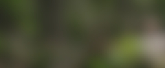 Technology and Engineering Science